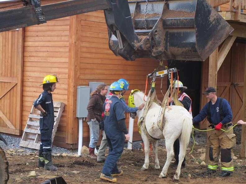 horse rescue virginia hay loft