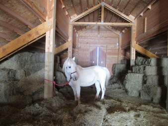 horse rescue hay loft virginia