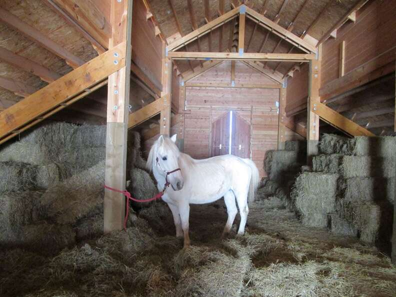 horse rescue hay loft virginia