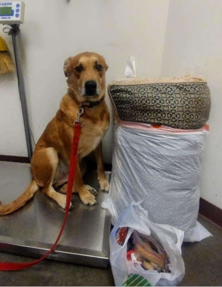 A dog surrendered at Maricopa County Animal Care and Control