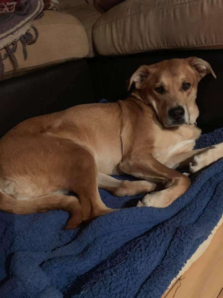 Wall-E the dog surrendered with toys and bed at his new home