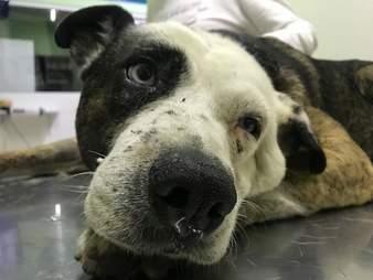 Dog lying on vet clinic examination table