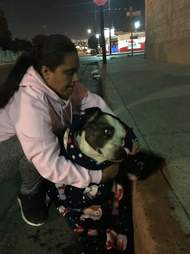 Woman rescuing dog in Mexico