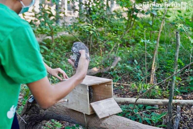 Wild owls caught in fence get help in Thailand