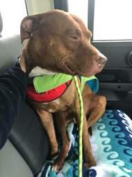 Dog sitting in back of car