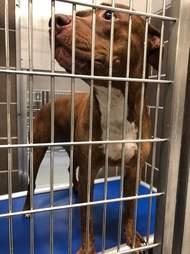 Dog inside shelter kennel