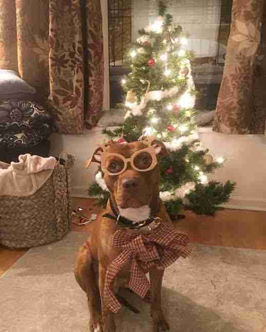 Dog dressed up in Christmas outfit