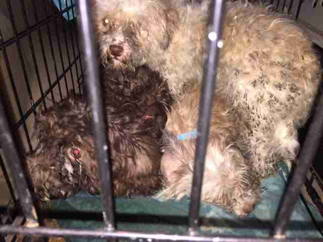 puppy mill rescue new jersey