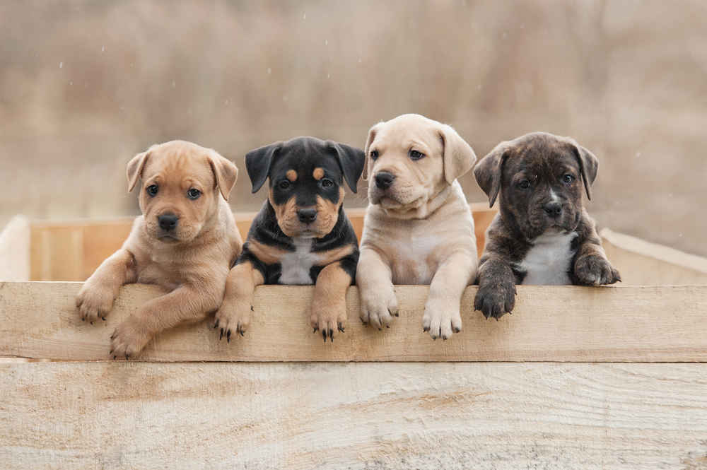 Most Popular Dog Names of 2018: Top Puppy Names of the Year