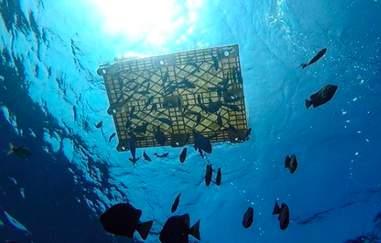 ocean litter the swim
