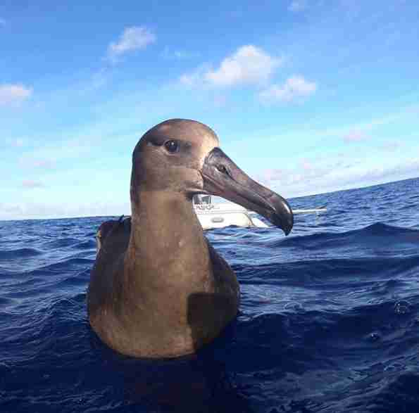 Guy Spots Rare Bird In Middle Of Ocean — Then Sees What He's Eating