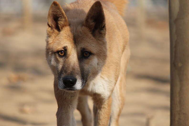 Close up photo of rescue dog