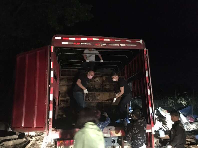Activists unloading dogs from truck