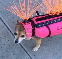dog wears coyote vest