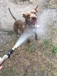 dog rescue texas juju