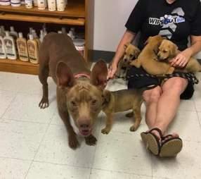 dog rescue texas