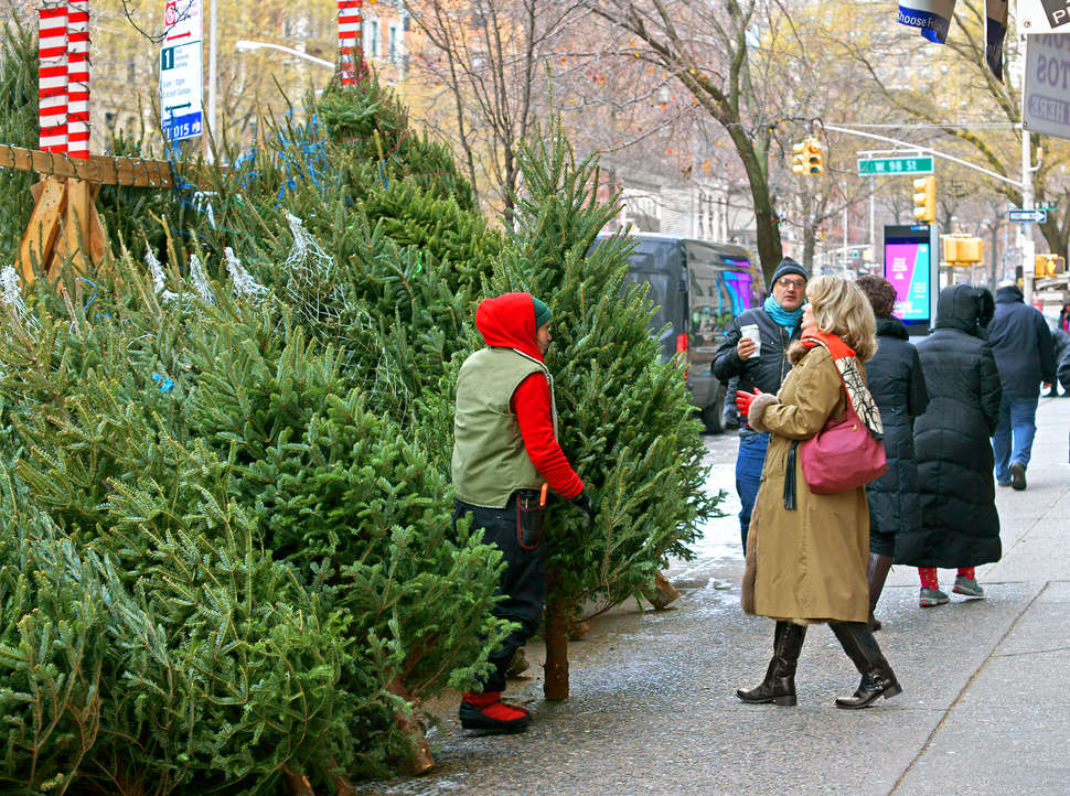 Christmas Tree In Nyc.Christmas Trees In Nyc Where How To Find The Perfect