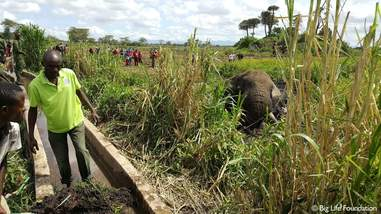 Rescuers approaching trapped elephant