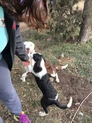 Border collies left outside backyard breeder in Kansas