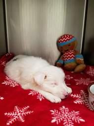 Dog sleeping in vet kennel