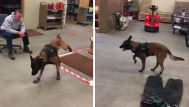 K9 Officer Jary tries on his snow booties
