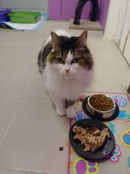 Cat standing in front of food