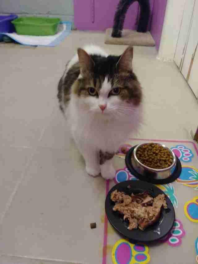 Cat standing in front of food