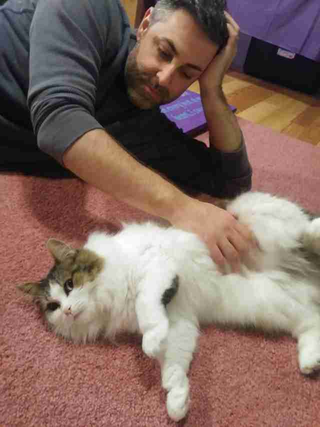 Man giving cat belly rubs