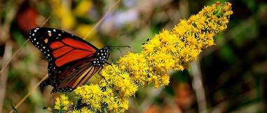 National Butterfly Center threatened by Trump's wall
