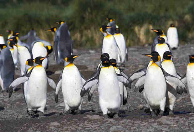 This Entire Island Ruled by Penguins Is Up for Sale and You Can Name Your Price