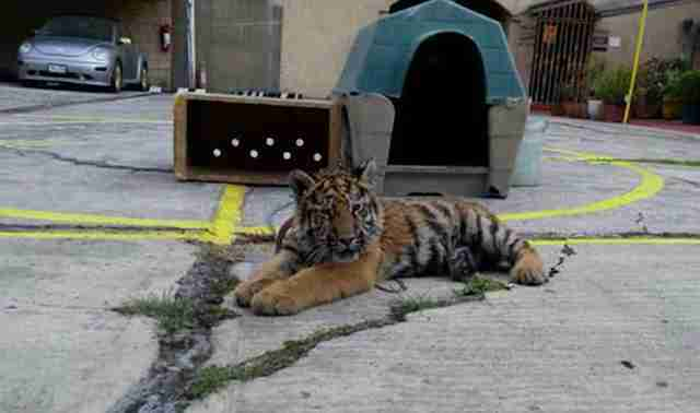 People Find Saddest Baby Animal Chained Up Outside Restaurant