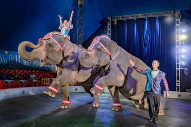 elephant circus performance