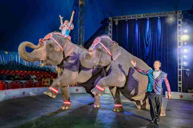 elephant circus performance