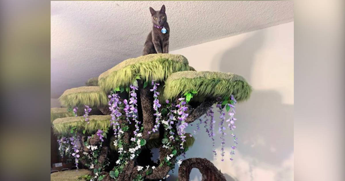 Family Of Cats Gets The Most Beautiful Cat Tree In The World The Dodo