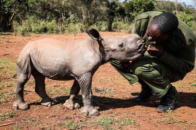 Keeper with baby rhino