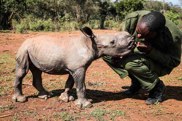 Keeper with baby rhino