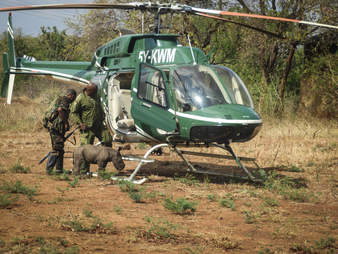 Rescuers with baby rhino