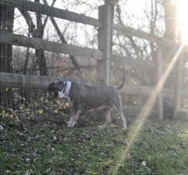 Dog exploring grass