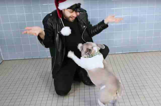 Magician Puts On A Show For Shelter Dogs — And Their Reactions Are Priceless