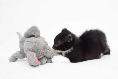 Kitten with stuffed elephant