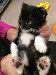 Rescued kitten being held in someone's hands