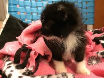 Rescued kitten on pink blanket