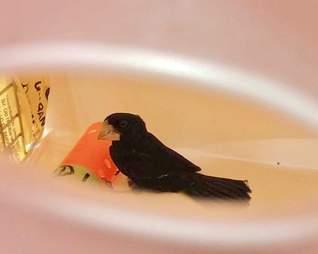bird rescue new york finch