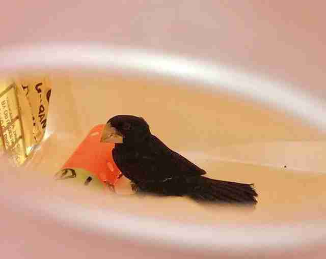 bird rescue new york finch