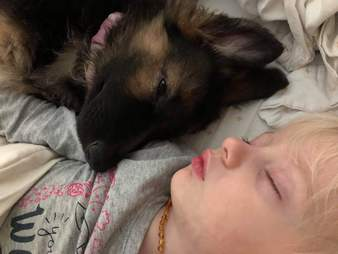 Wren the dog sleeps with her toddler friend