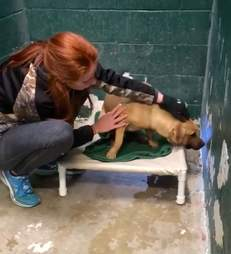 Cody the dog surrendered for eating trash in the shelter