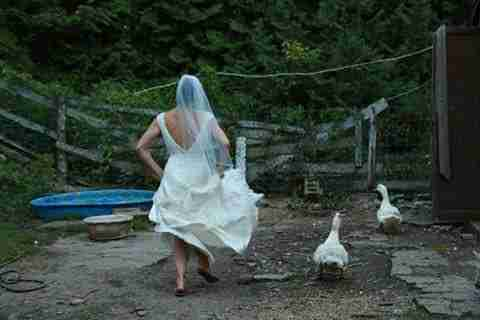 Bride feeding her rescued animals at farm sanctuary in Ontario