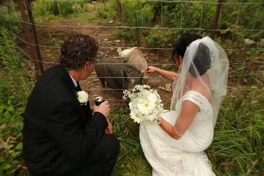 Bride and groom with rescued pigs