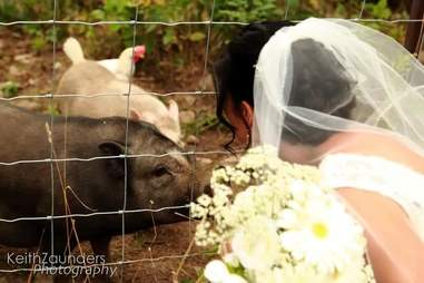 Bride with her rescued pigs