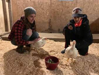 Rescue hens happily come running to rescuer at sanctuary